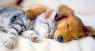 dog_cat_friends